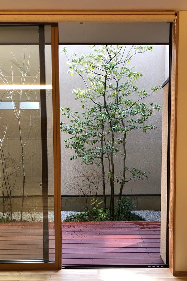 お庭 窓 常緑樹 ソヨゴ