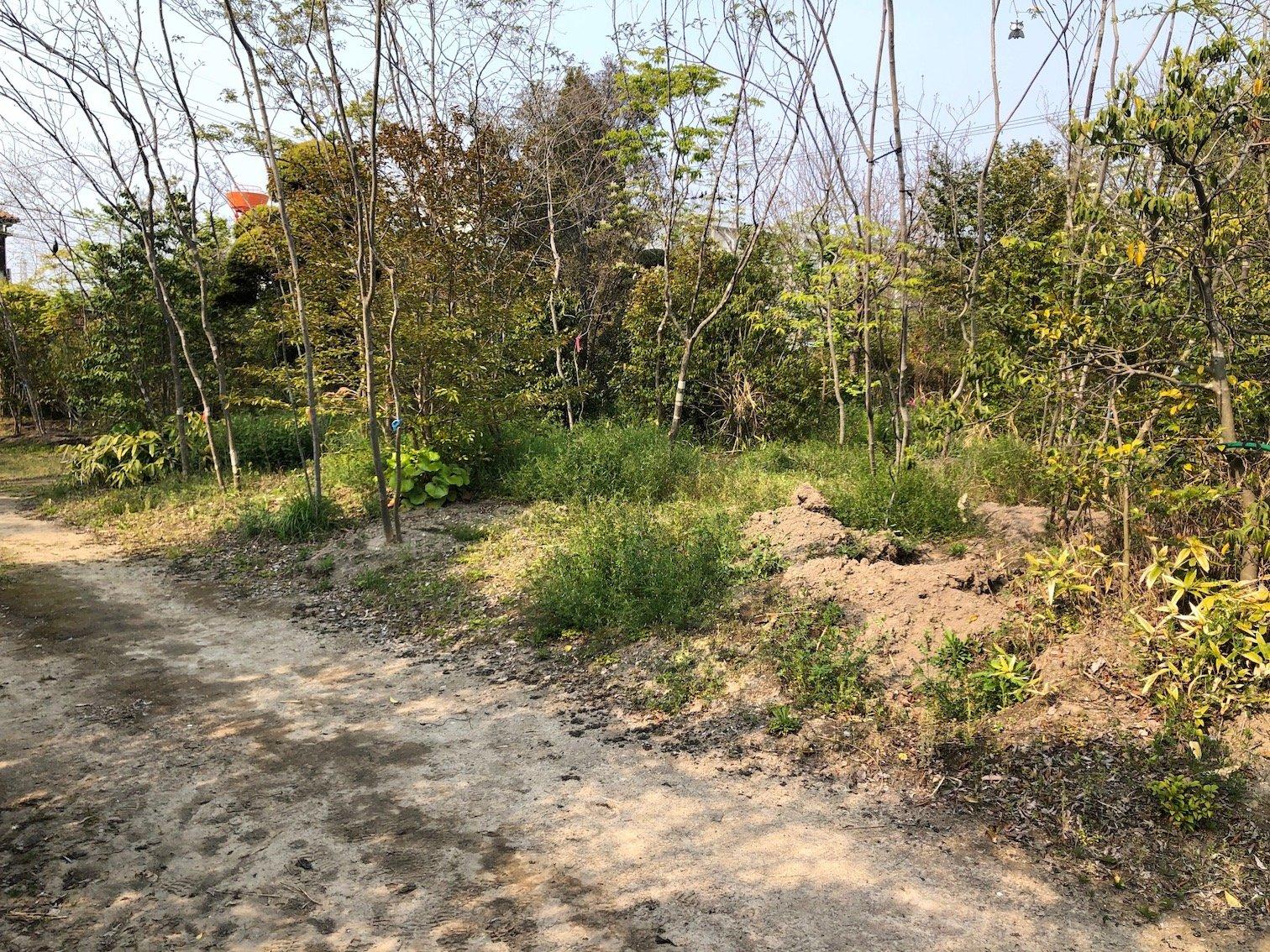 雑木 庭づくり カラスノエンドウ