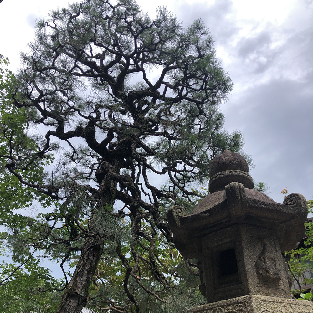 寺院 お庭 手入れ 松 灯籠