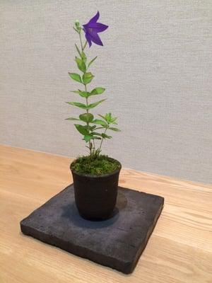 f:id:GardenPorter:20150701171254j:plain