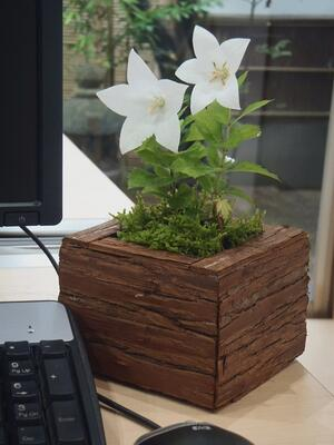 f:id:GardenPorter:20150709142501j:plain