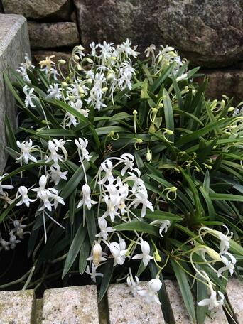 f:id:GardenPorter:20150710141902j:plain