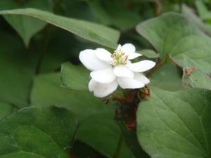 f:id:GardenPorter:20150711170610j:plain