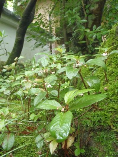 f:id:GardenPorter:20150711214555j:plain