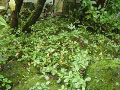f:id:GardenPorter:20150711214627j:plain