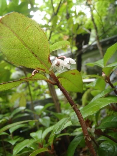 f:id:GardenPorter:20150711214723j:plain