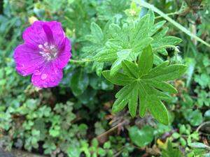 f:id:GardenPorter:20150718201456j:plain