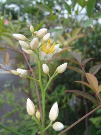 f:id:GardenPorter:20150723170622j:plain