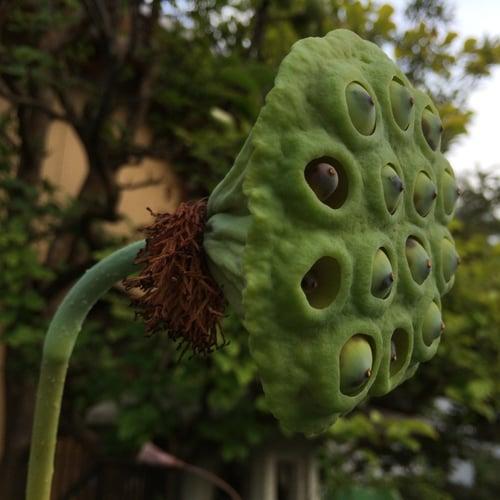 f:id:GardenPorter:20150810213551j:plain