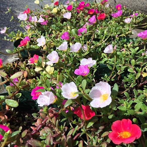 f:id:GardenPorter:20150812190727j:plain