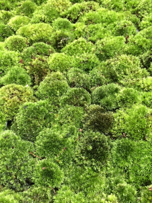 f:id:GardenPorter:20150819154540j:plain