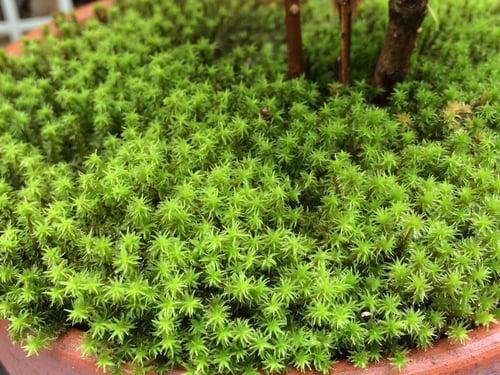 f:id:GardenPorter:20150820121942j:plain