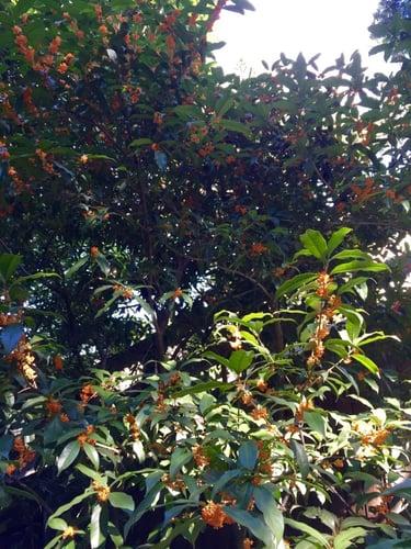f:id:GardenPorter:20151015125650j:plain