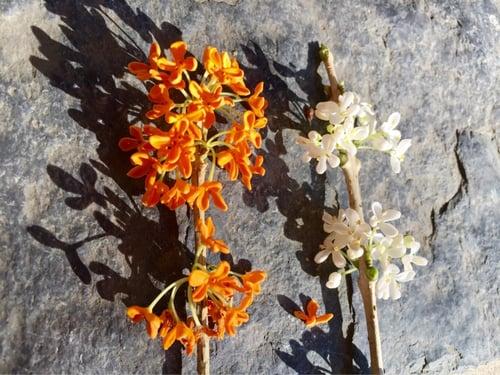 f:id:GardenPorter:20151015130108j:plain
