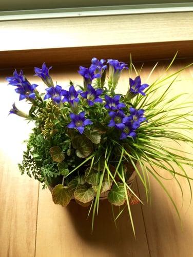 f:id:GardenPorter:20151015150003j:plain