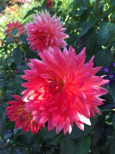 f:id:GardenPorter:20151028083747j:plain