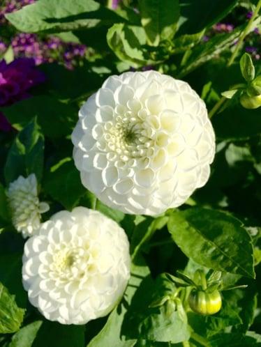 f:id:GardenPorter:20151028083842j:plain