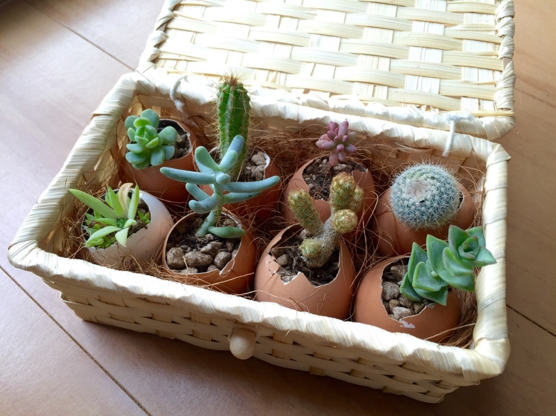 f:id:GardenPorter:20151102154037j:plain