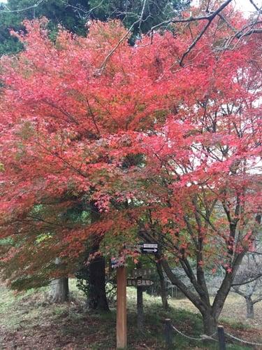 f:id:GardenPorter:20151130105214j:plain
