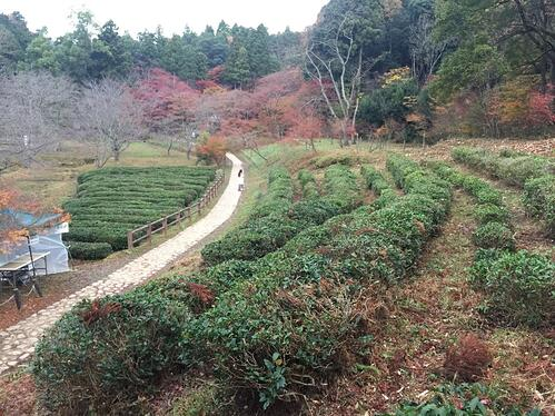 f:id:GardenPorter:20151130105537j:plain
