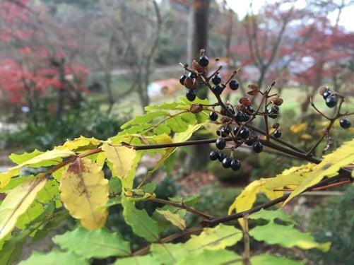 f:id:GardenPorter:20151130111649j:plain
