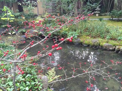 f:id:GardenPorter:20151202145749j:plain