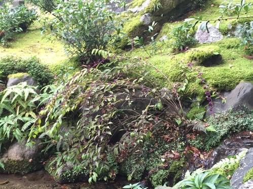 f:id:GardenPorter:20151203112716j:plain