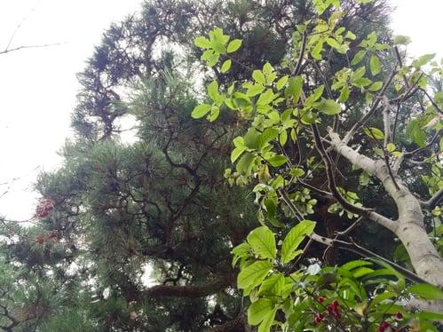 f:id:GardenPorter:20151210131124j:plain