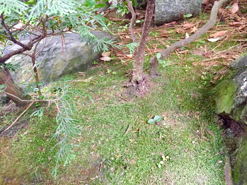 f:id:GardenPorter:20151210131520j:plain