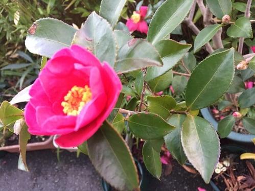 f:id:GardenPorter:20151219164224j:plain