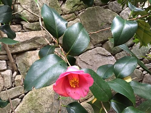 f:id:GardenPorter:20151219164350j:plain