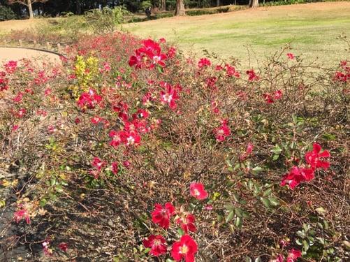f:id:GardenPorter:20151221115247j:plain