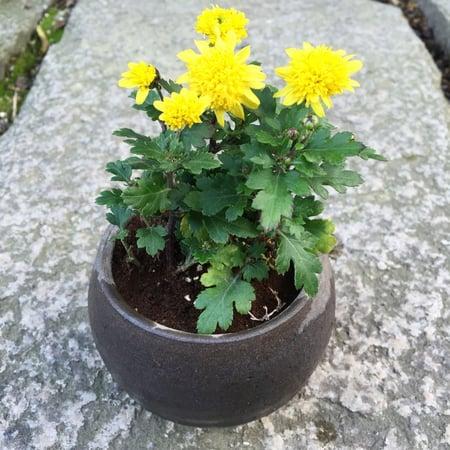f:id:GardenPorter:20151226180947j:plain