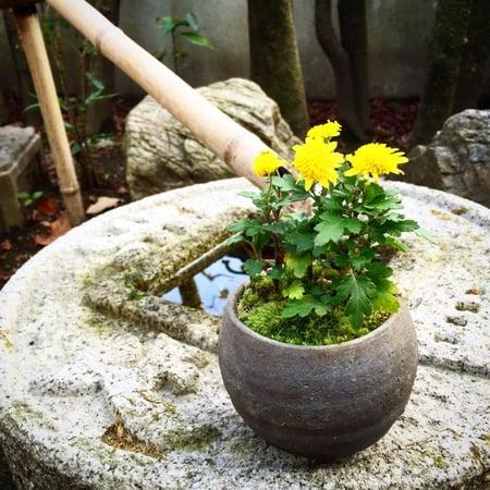 f:id:GardenPorter:20151226181836j:plain