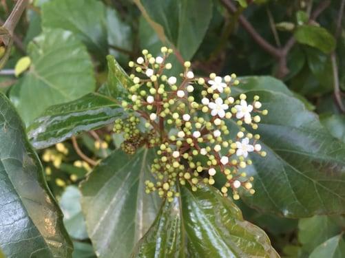 f:id:GardenPorter:20160127170551j:plain