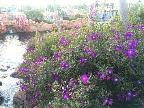 f:id:GardenPorter:20160129140646j:plain