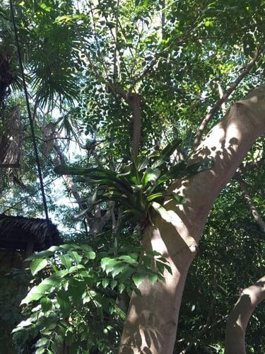 f:id:GardenPorter:20160129144111j:plain