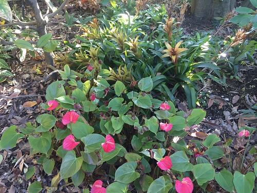 f:id:GardenPorter:20160129154419j:plain