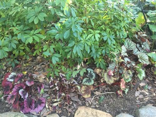 f:id:GardenPorter:20160129154847j:plain