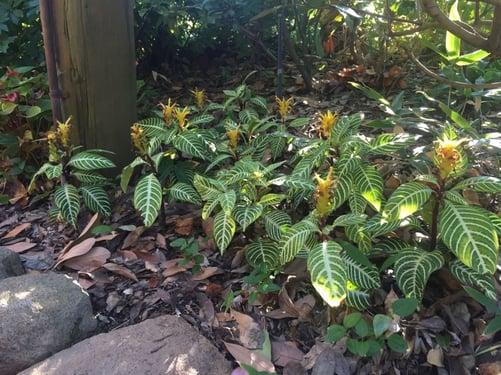 f:id:GardenPorter:20160129155733j:plain