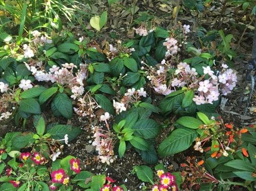 f:id:GardenPorter:20160129155946j:plain