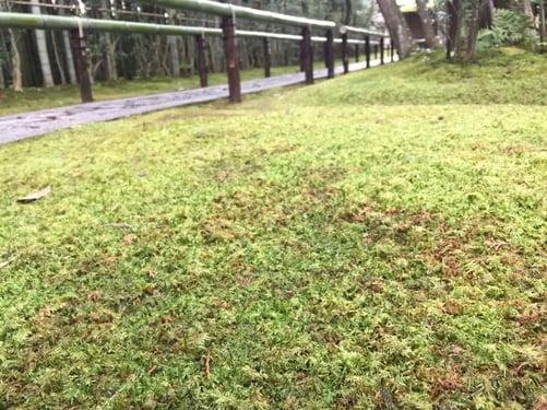 f:id:GardenPorter:20160302175205j:plain