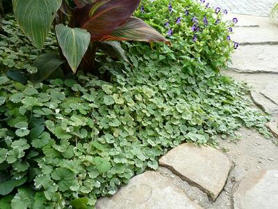 f:id:GardenPorter:20160421171528j:plain