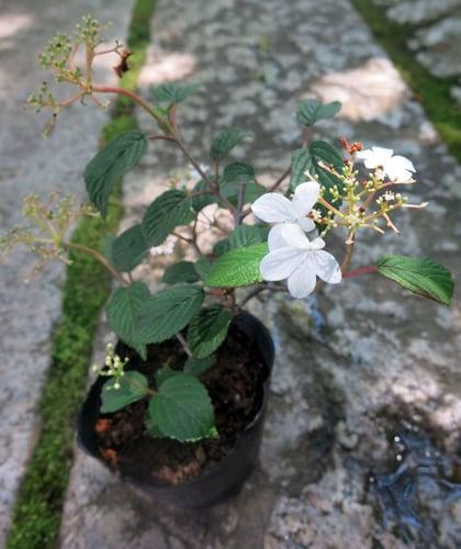 f:id:GardenPorter:20160519103518j:plain