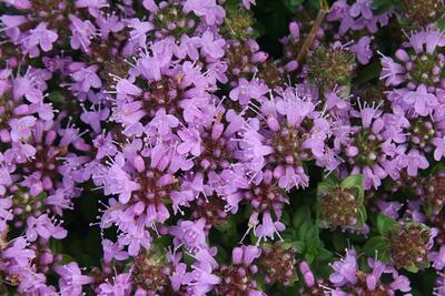f:id:GardenPorter:20160822131728j:plain