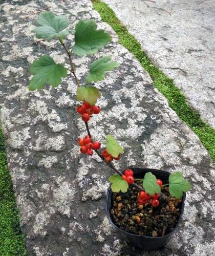 f:id:GardenPorter:20161013140052j:plain