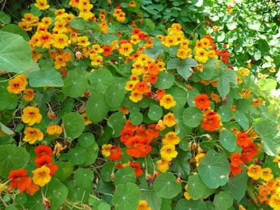 f:id:GardenPorter:20161110092924j:plain