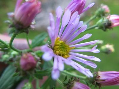 f:id:GardenPorter:20161117075752j:plain