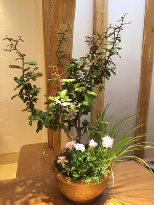 f:id:GardenPorter:20161226081303j:plain