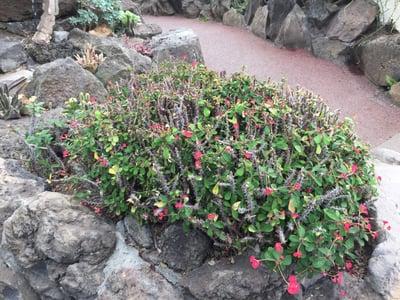 f:id:GardenPorter:20170306091657j:plain